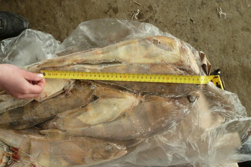 Оптовая продажа рыбы в новосибирске